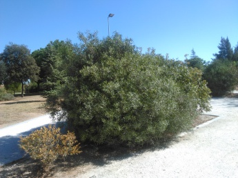 parque-del-tamarguillo-san-ildefonso-sept-2015-048