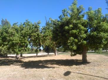 parque-del-tamarguillo-san-ildefonso-sept-2015-049