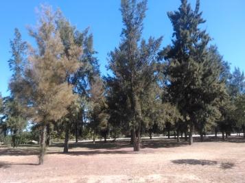 parque-del-tamarguillo-san-ildefonso-sept-2015-050