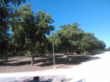 parque-del-tamarguillo-san-ildefonso-sept-2015-053
