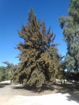parque-del-tamarguillo-san-ildefonso-sept-2015-058