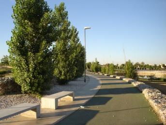 parque-miraflores-norte-populus-nigra-var-pyramidalis