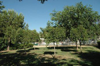 parque-miraflores-sur-morus-alba-var-pendula-19-5-2005-054
