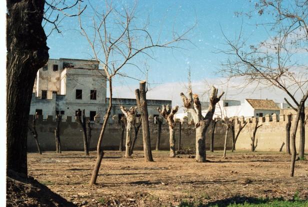 poda-jardines-del-valle-a3