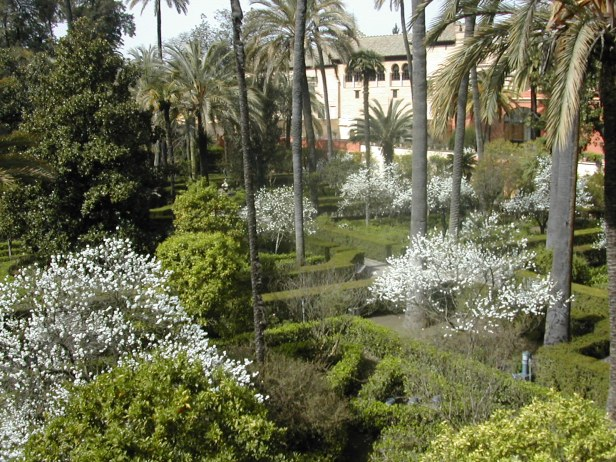 prunus-persica-flore-pleno-en-el-alcazar-189-2-b