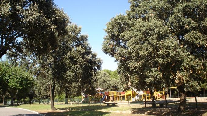 quercus-ilex-parque-del-alamillo-jun-2011-044