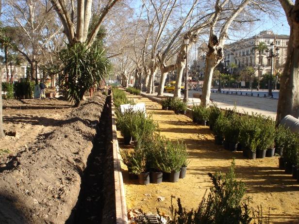 sevilla-febrero-plantacion