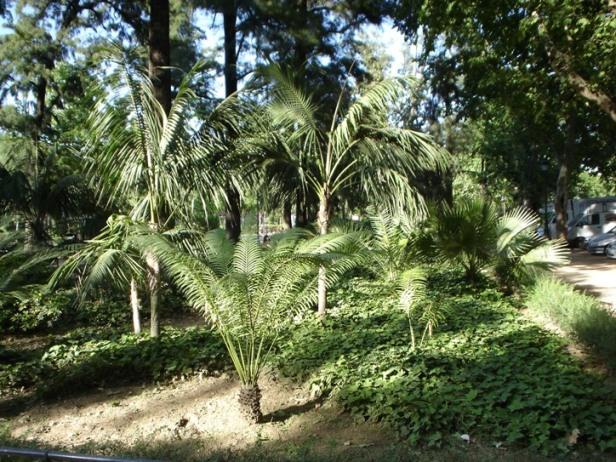 sevilla-glorieta-de-goya-kentias