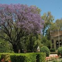 I.- Los árboles de nuestra ciudad