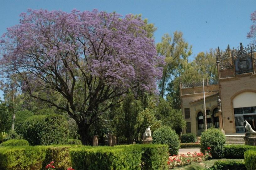 I los rboles de nuestra ciudad jardines sin fronteras for Arboles ornamentales jardin