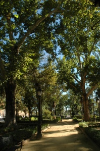 sevilla-jardines-de-cristina-platanos