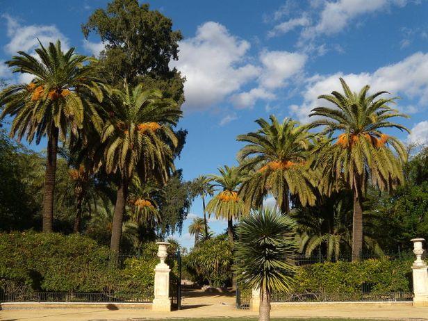sevilla-jardines_de_murillo_1