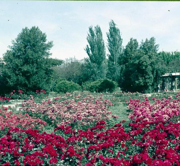 sevilla-parque-de-los-principes-rosaleda-2