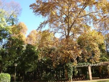 sevilla-parque-de-maria-luisa-036-2