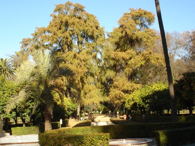 sevilla-parque-de-maria-luisa-ene-12-023