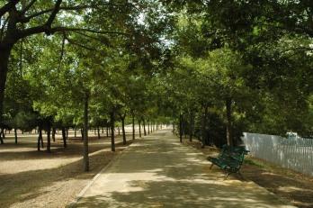 sevilla-parque-de-miraflores-celtis-occidentalis