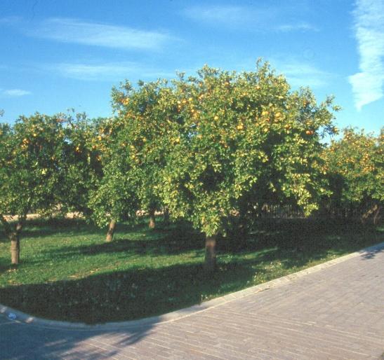 sevilla-parque-del-alamillo