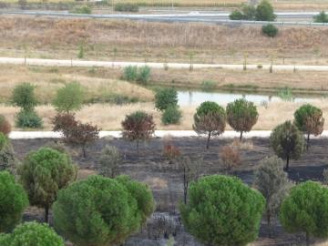 sevilla-parque-del-tamarguillo-tercer-incendio-1