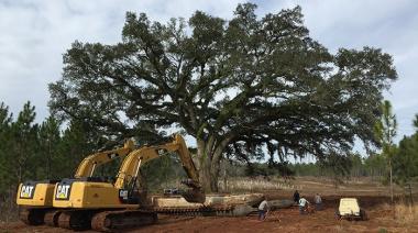 transplanting-large-tree