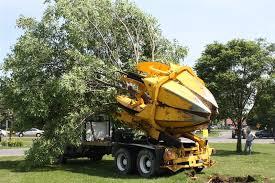 trasplanting-trees
