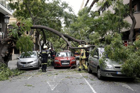 V 07 VALENCIA (COMUNIDAD VALENCIANA) 05/09/2015 La caída de un árbol en una céntrica calle a consecuencia del fuerte viento que sopla en Valencia ha dañado tres vehículos que se encontraban en la zona sin generar daños personales, han informado fuentes municipales y del Cuerpo de Bomberos de la ciudad.EFE/ Juan Carlos Cárdenas