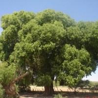 Beneficios y perjuicios de los árboles