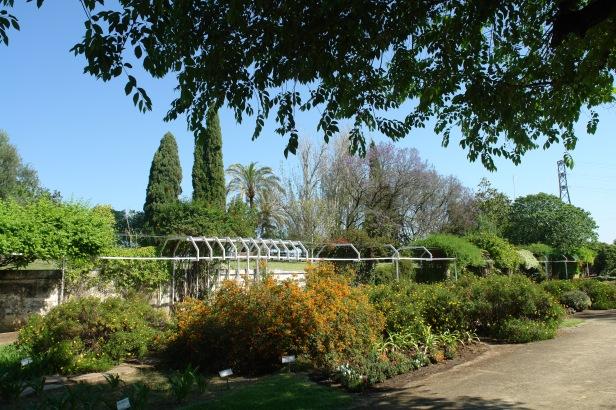 arboretum-el-carambolo-20-mayo-2016-a