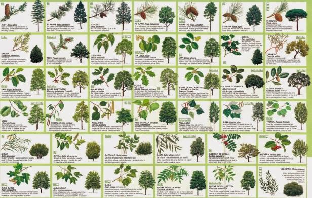 arbres-de-catalunya