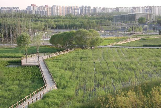 beijing-olympic-forest-park-wetland-2