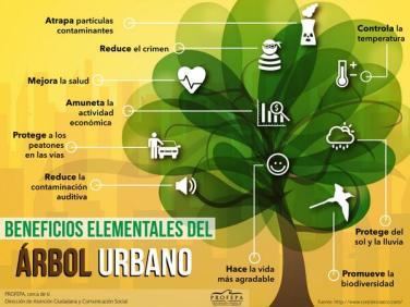 Beneficios de los árboles en las ciudades