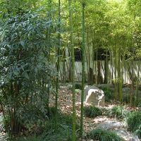 Iniciación al jardin chino