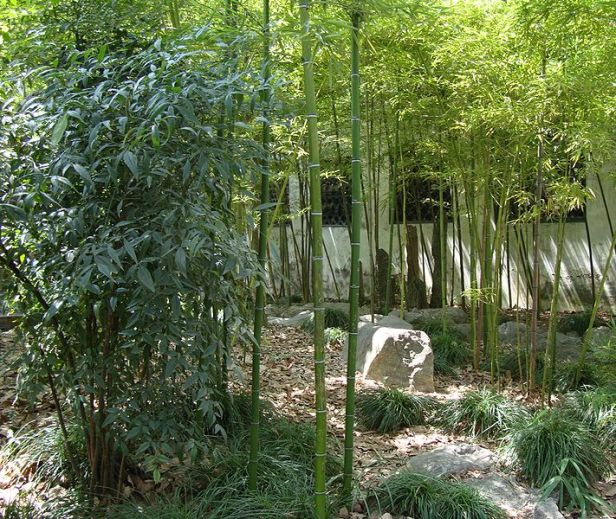 china-yuyuan_garden_-_bamboo