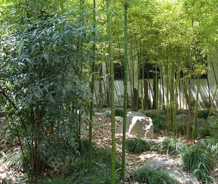 Iniciaci n al jardin chino jardines sin fronteras - Jardines con estilo ...