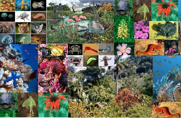 ecosistema-biodiversity