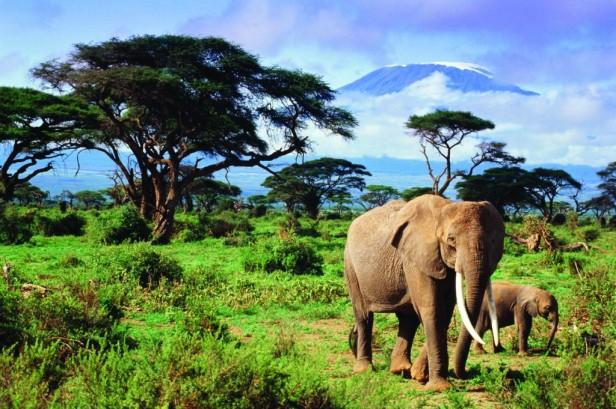 ecosistema-mt-kilimanjaro-elephants-1024x681