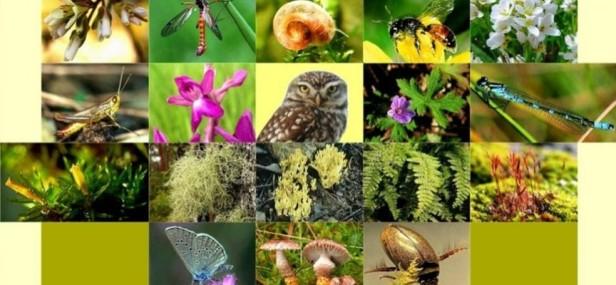 ecosistema-que-es-la-biodiversidad_1451