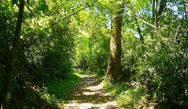 ecosistemas-acomo-cuidar-los-bosques