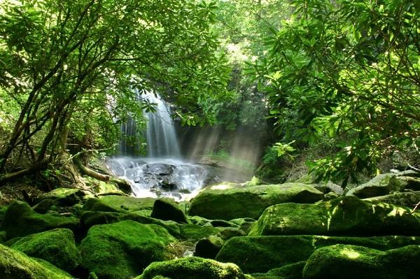 ecosistemas-biodiversidad-600x399