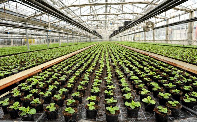 Apuntes del cultivo de plantas en maceta o contenedor for Macetas cultivo interior