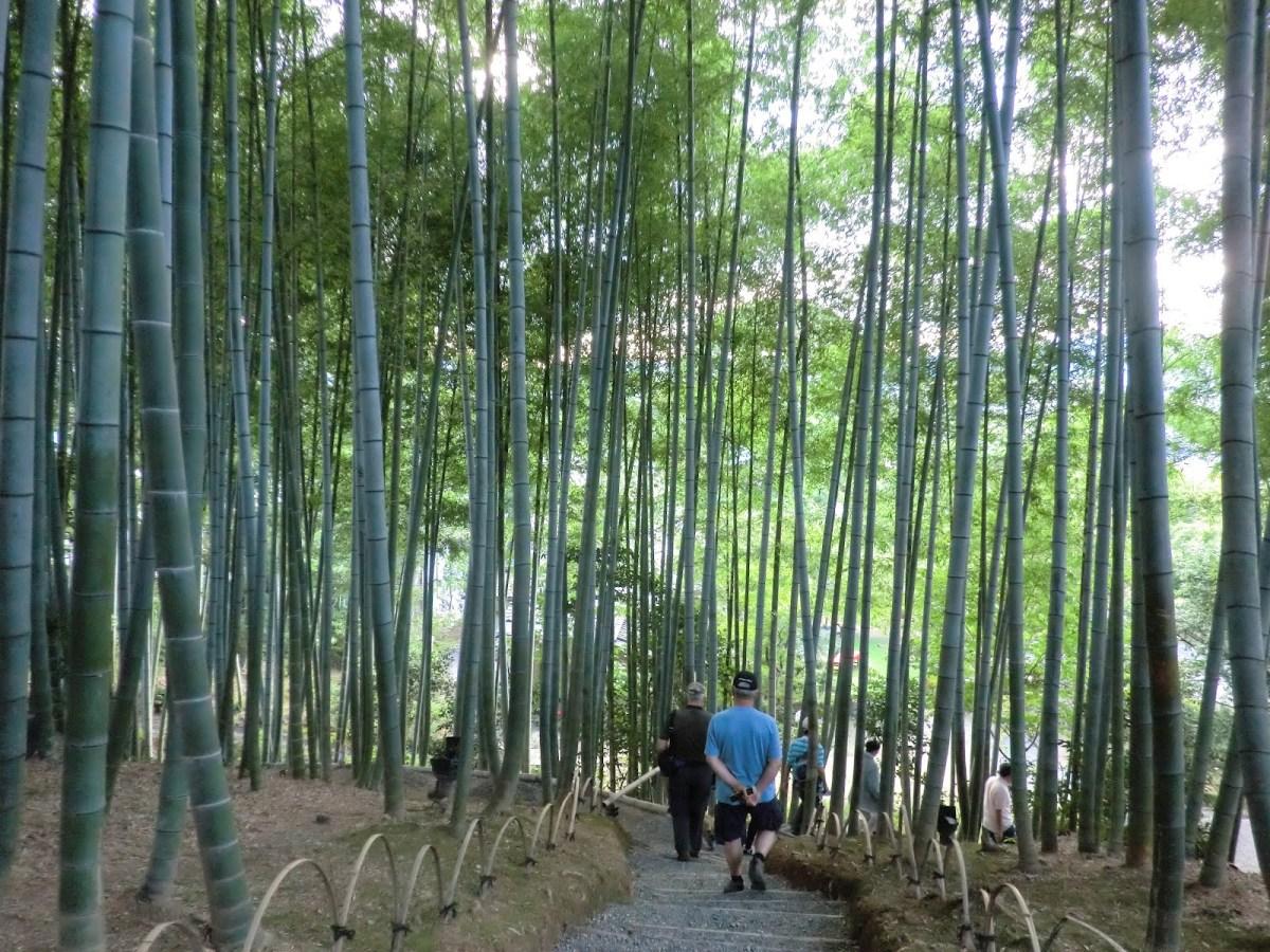 Los bambúes