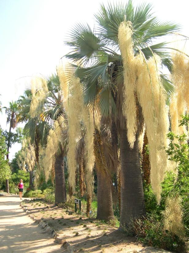 jardi-marimurtra-087