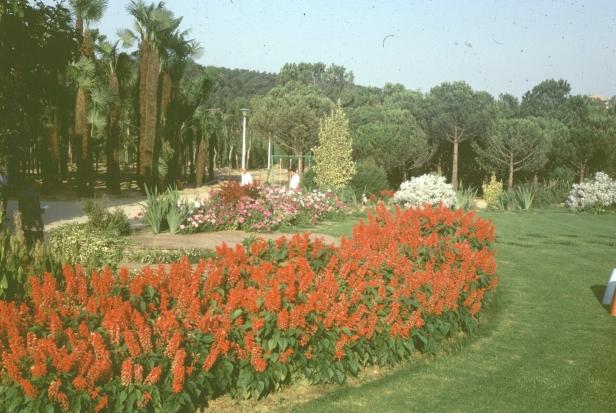 jardineria-urbana-salvias