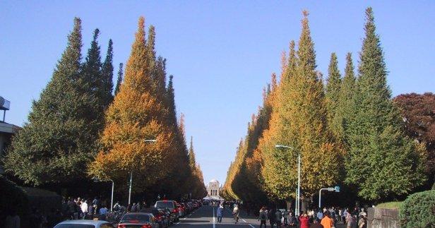 jingu_gaien_ginkgo_street_tokyo