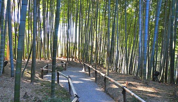 kodaiji-temple-kyoto-bambues