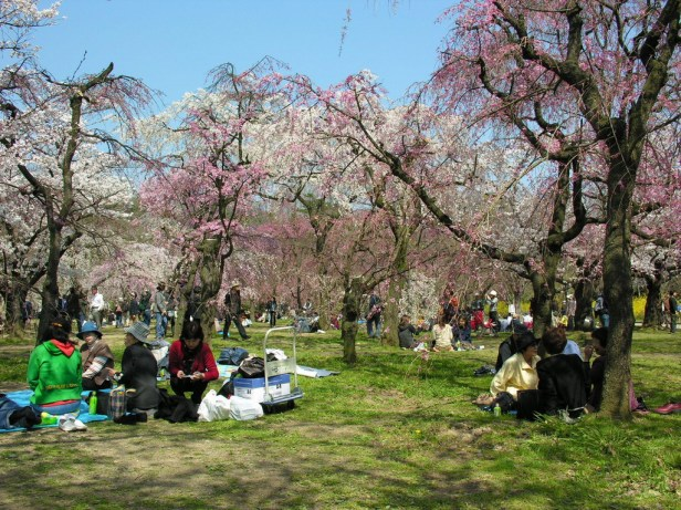 kyoto-cherry-blossoms-1_redimensionar