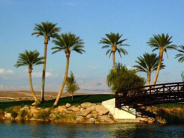 lac-palms