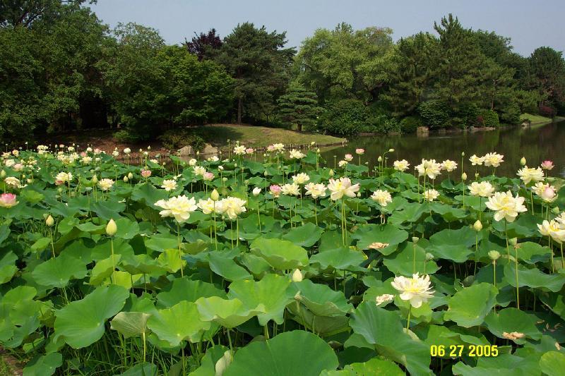 Las plantas acu ticas y su cultivo jardines sin fronteras for Jardines sin plantas