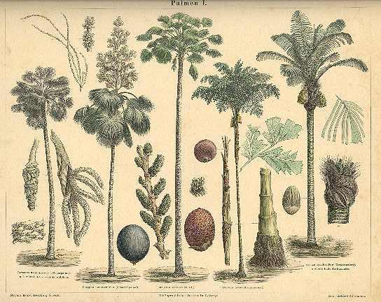 palm-tree-1874