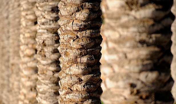 palm-tree-trunks