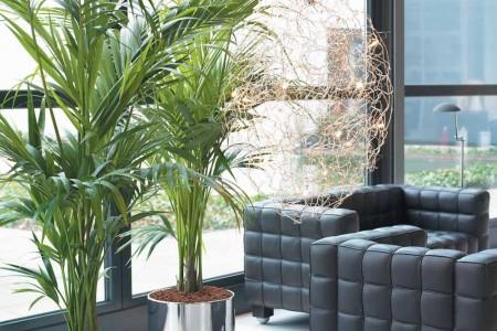 El mundo de las palmeras ornamentales jardines sin fronteras - Plantas de interior palmeras ...